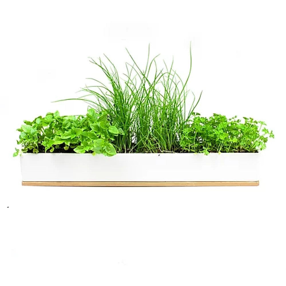 Microherbs Windowsill Box