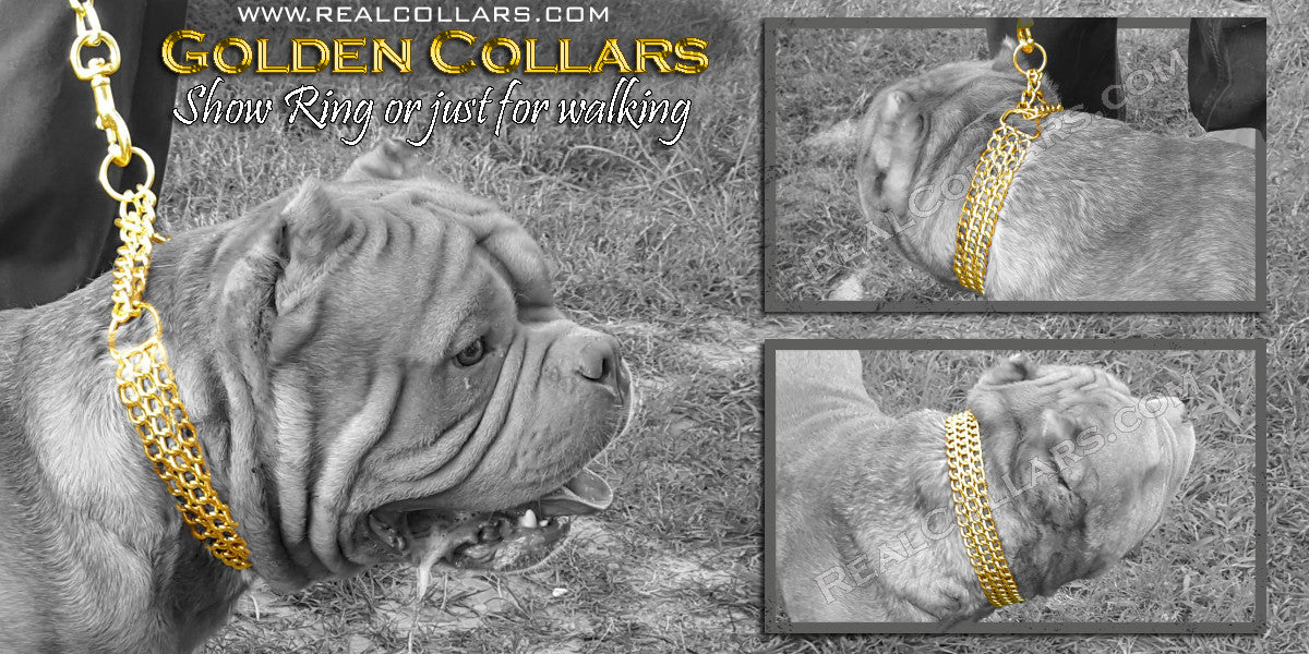 Dog Collars Dog show chains Spike collars
