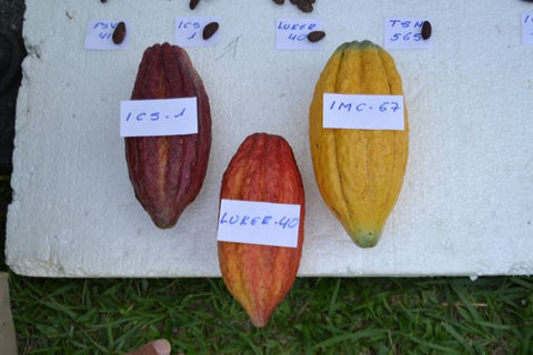 cacao colombia  casa luker
