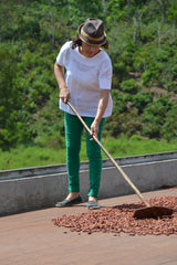cocoa bed, drying deck, cocoa beans, cacao beans, drying beans