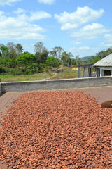 cocoa beans drying on wood, cocoa beans in bahia, catongo cacao beans, drying bed