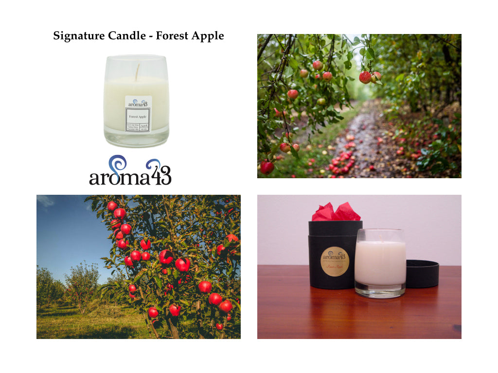 Forest Apple Signature Candle