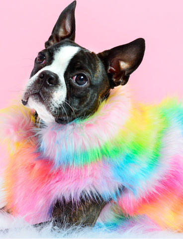 OVER THE RAINBOW FAUX FUR DOG JACKET