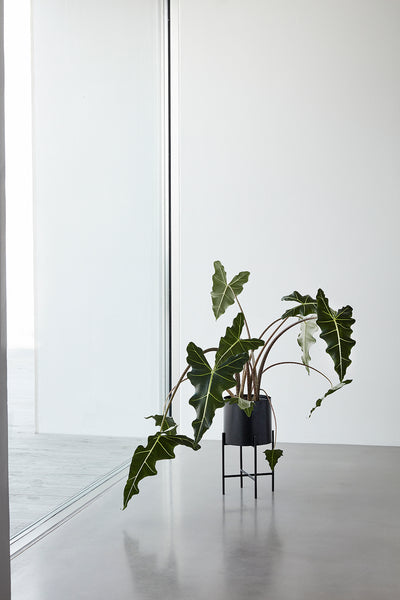 Set of two Planters in Black by Hübsch