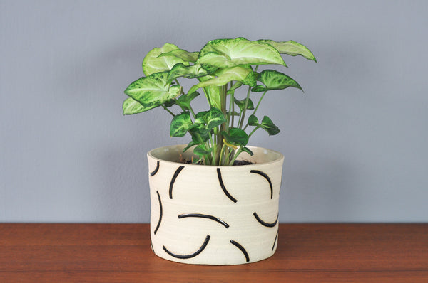 Medium Planter with Black Curves by Hannah Bould