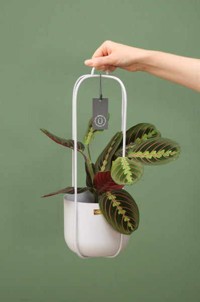 Hanging Planter in Grey with 4 arms by Hübsch
