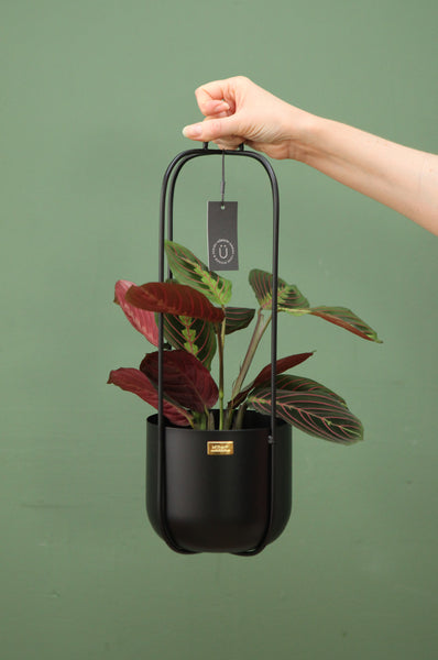 Hanging Planter in Black with 4 arms by Hübsch