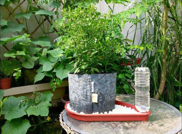 The Master Gardener Itsy Bitsy Self Watering Garden