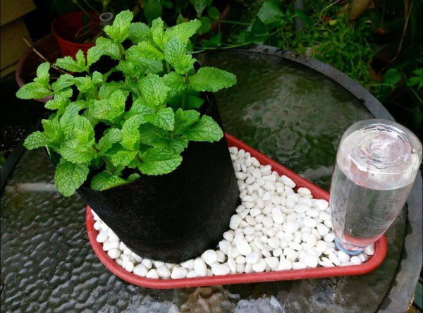 The Itsy Bitsy Self Watering Garden Planter Includes
