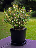 35-Inch Multi-Strand: 100 Lights: Incandescent GREEN & WHITE