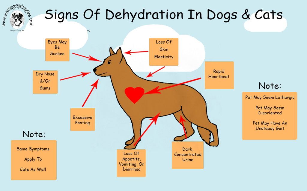 Signs of Dehydration in Dogs and Cats