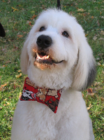 Miss Booger's Handmade Bow-wow Ties for Dogs - Miss Booger's Pet Sitting & Supplies