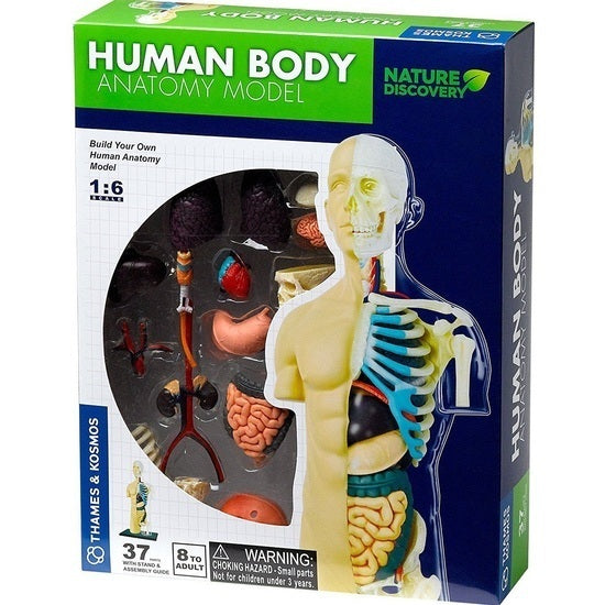 THAMES & KOSMOS Human Body - Anatomy Model 260830