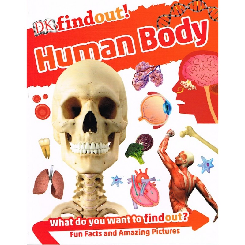 DK Find Out More! Human Body
