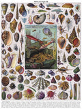 New York Puzzle Co. -Vintage Puzzle - Mollusks Shells 1000 pc