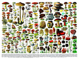 New York Puzzle Co: Vintage Puzzle - Mushrooms 1000 pc
