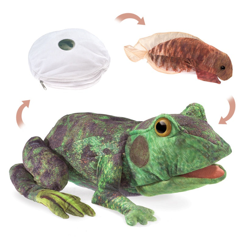 FOLKMANIS  Life Cycle Puppet -  Frog
