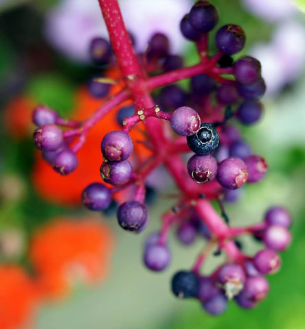 Blog Feed Article Feature Image Carousel: Acai Berry Skin Benefits