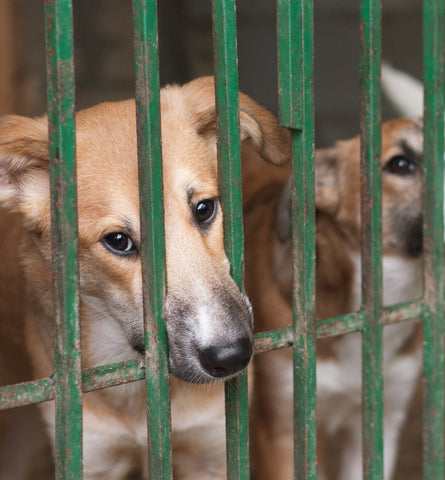 Blog Feed Article Feature Image Carousel: Our Fight Against the Yulin Dog Festival