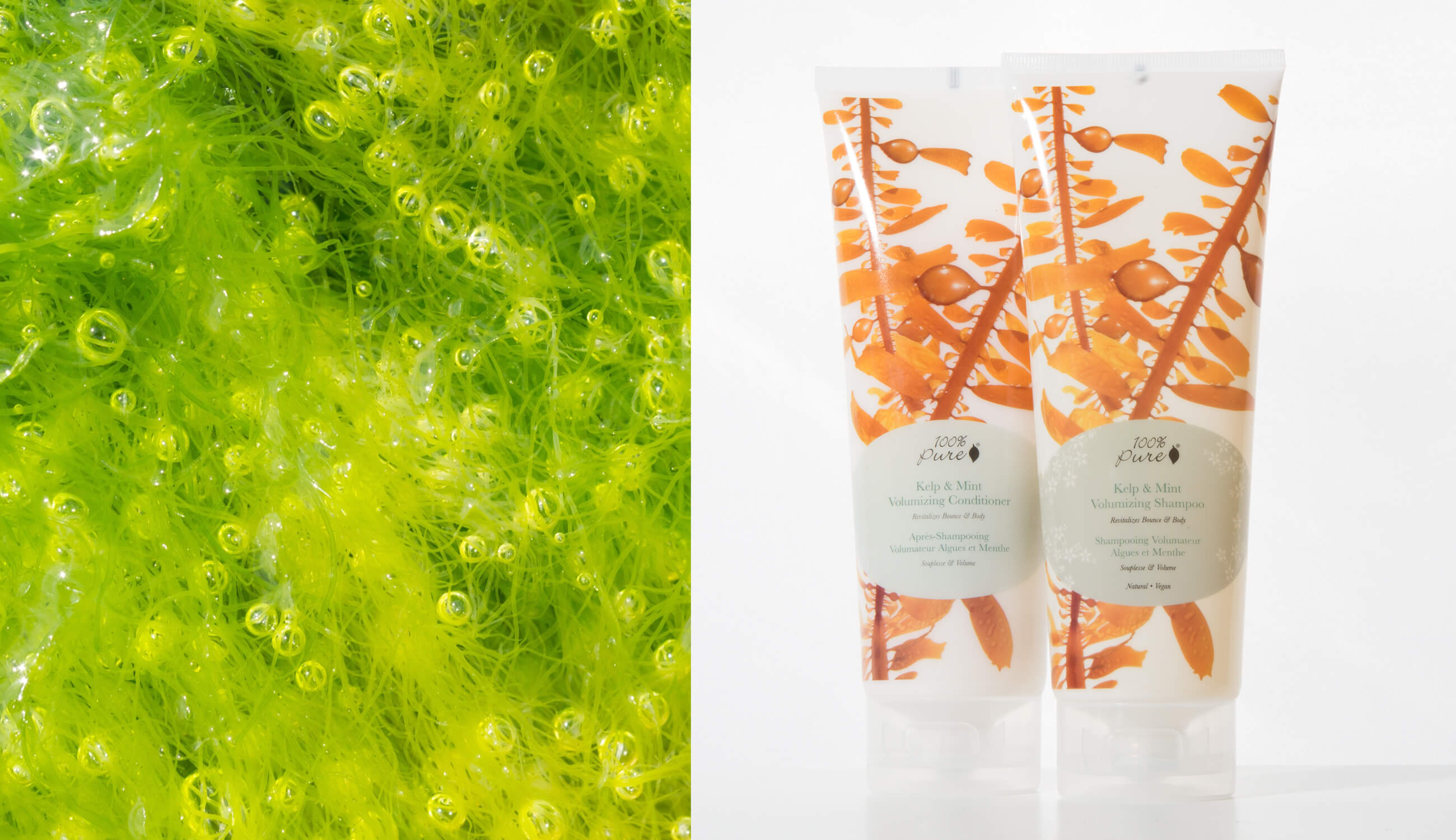 100% PURE Kelp and Mint Hair Products
