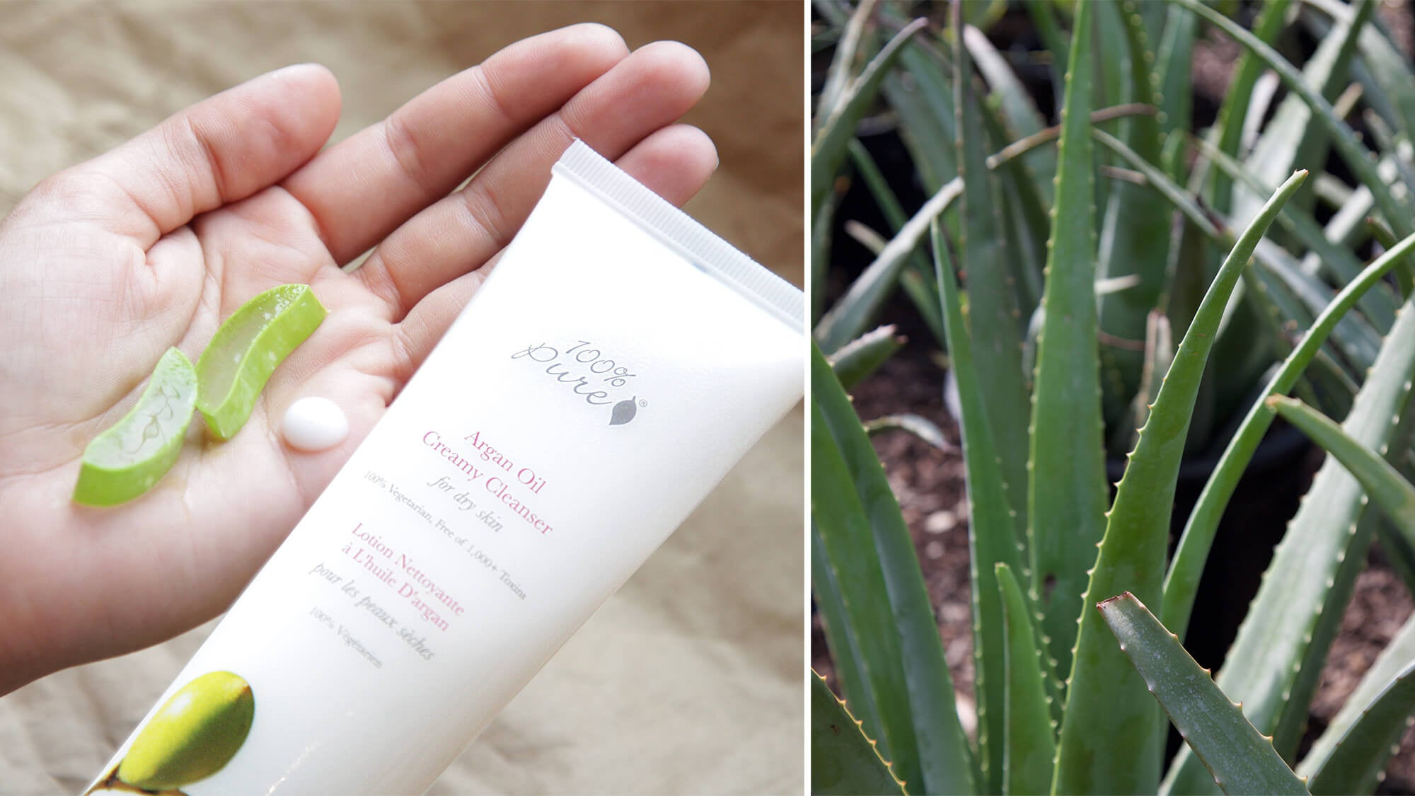 Aloe Vera in Skincare and Makeup | 100% PURE