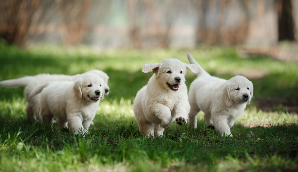 Happy-Puppies