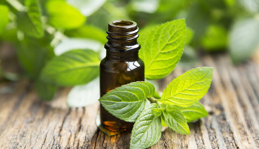 main_peppermint essential oil