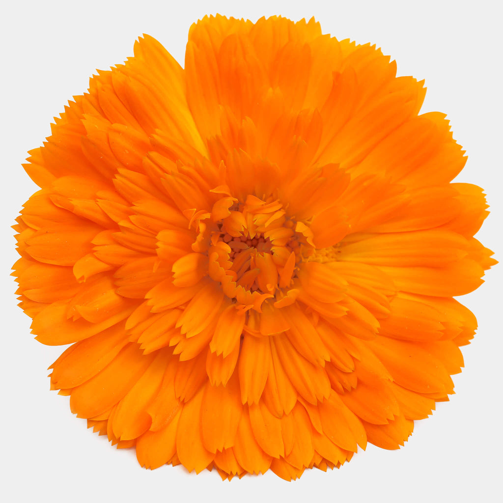 Product Page Key Ingredients: Calendula
