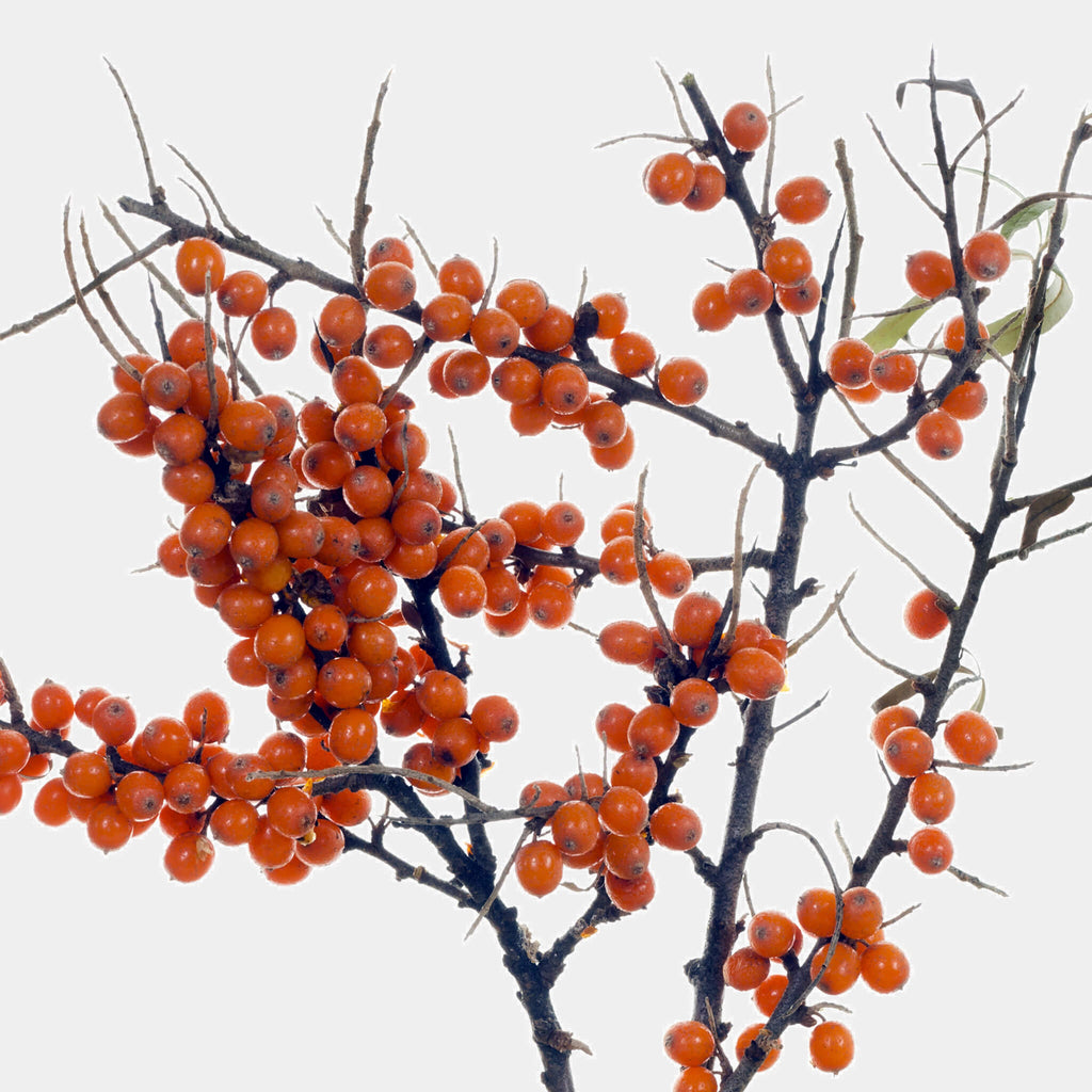 Product Page Key Ingredients: Sea Buckthorn