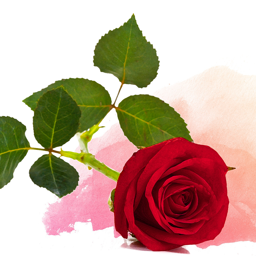 Happy Red Rose Day 100 Pure