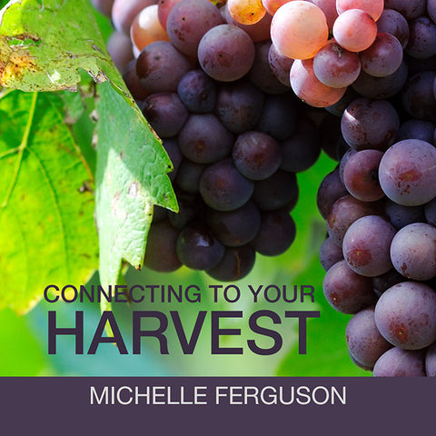 Connecting to Your Harvest