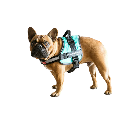 Dog's Life Active No Pull Control Handle Harness Turquoise