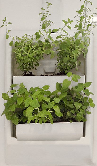 Living Wall - Two Container Wall Planter (Currently Out of Stock)