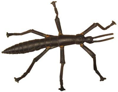 LORD HOWE ISLAND STICK INSECT replica toy