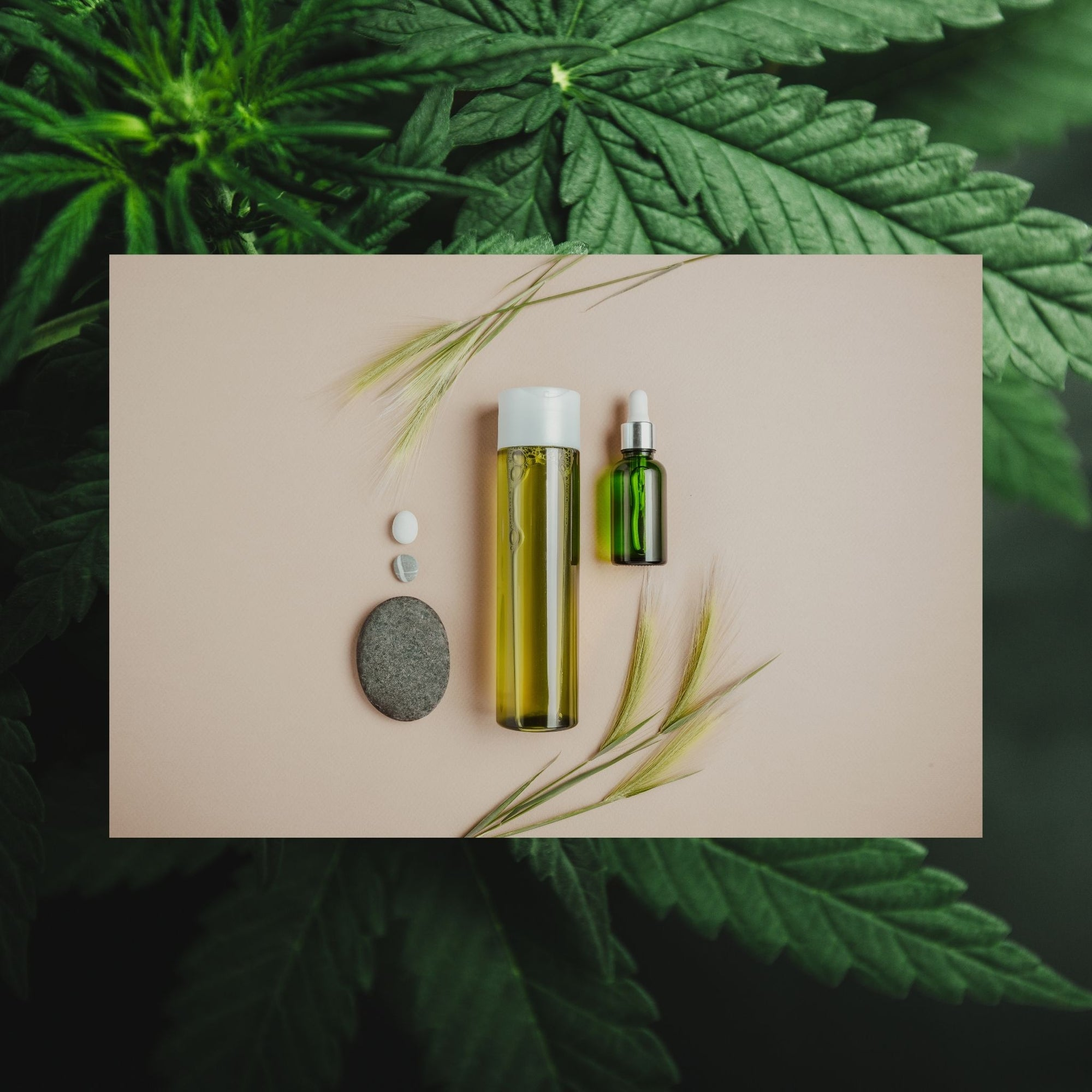 CBD body oil with cbd plants in the background
