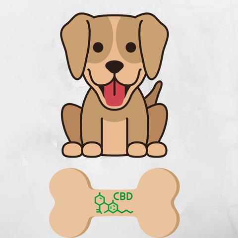 CBD dog treats with a dog smiling happy because he is feeling better