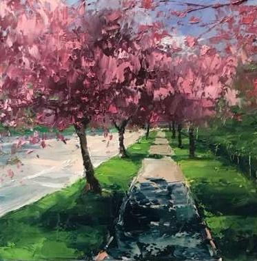 Cherry Trees, Spring Light