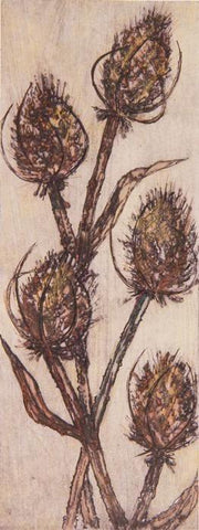 Teasels at Lanet (2/30)