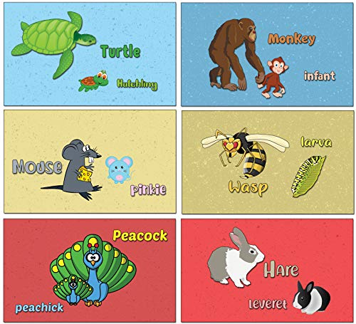 Elementary Substraction Learning Flash Cards for Children (120-Pack - 12 cards front & back designs x 10 sets)
