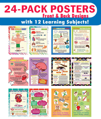 Creanoso Human Body Educational Learning Posters (24-Pack) - DIY Bulk Supply Home Teaching Set