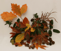Dragons & Daisies Half-Term Activity Blog - Fun things for kids to do Foliage Collecting