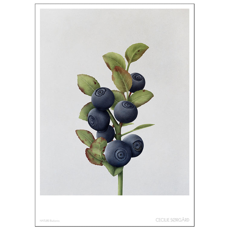 POSTER - NATURE BLUEBERRIES