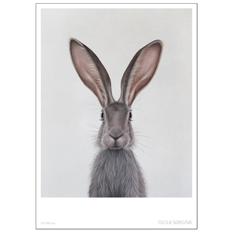 POSTER - NATURE HARE