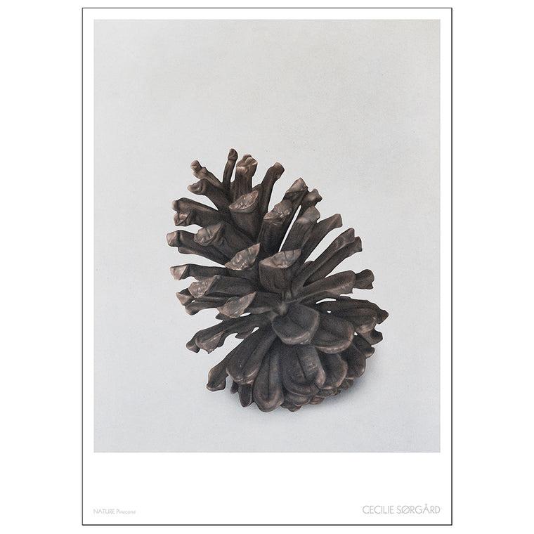 POSTER - NATURE PINECONE