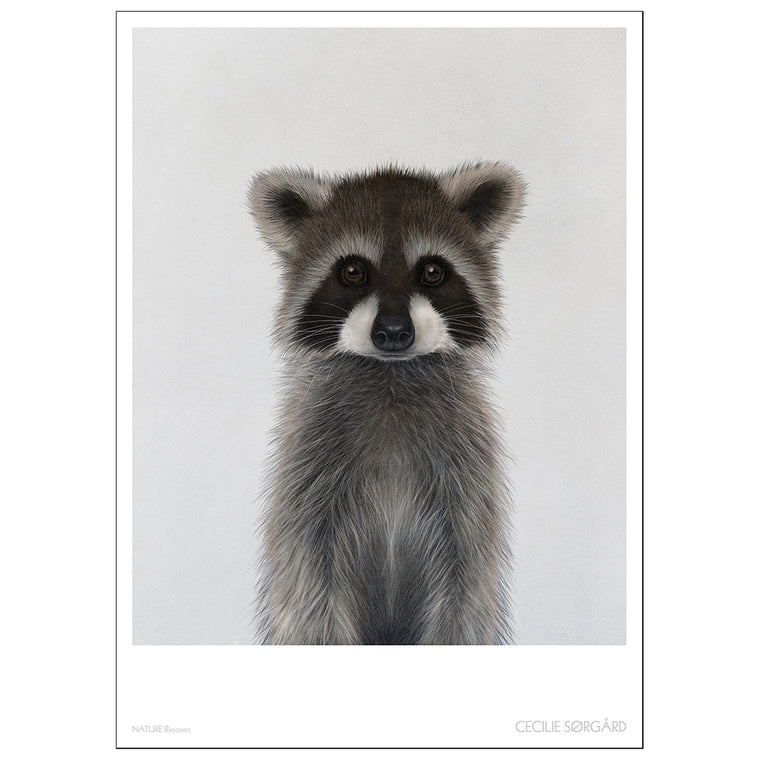 POSTER - NATURE RACOON