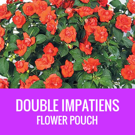 IMPATIENS (Double Impatiens) - FLOWER POUCH