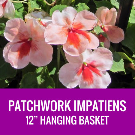 "IMPATIENS (Patchwork) - 12"" HANGING BASKET"