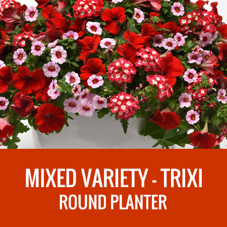 MIXED VARIETY (TRIXI) - ROUND PLANTER