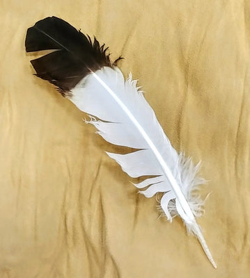 "Eagle Wing Feather 10""- 14"""
