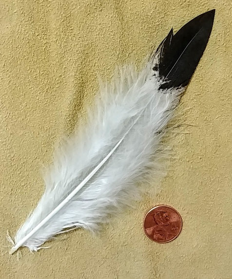 "Imitation Eagle Tail Plumes 6""- 6.5"""